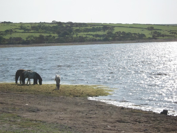 Horses at Colliford Lake