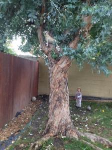 tree-climbing-poppy