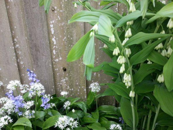 little white things on stalks