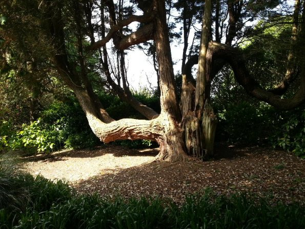 Crooked Tree 1